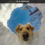 hund-kigger-ned